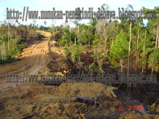 Nunukan Kota Perbatasan Kalimantan Timur Jalan Hutan Gambar Dibuka Lindung