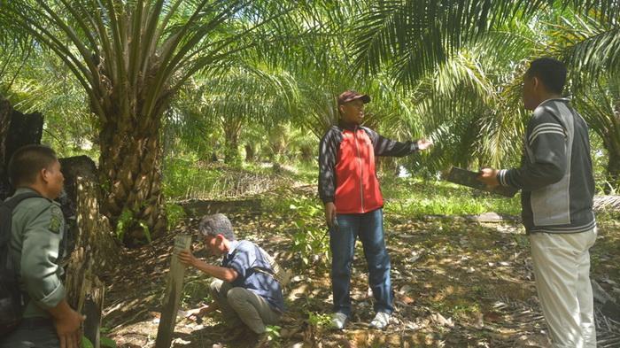 Waduh Oknum Pejabat Pengusaha Berkebun Sawit Hutan Lindung Kebun Raya