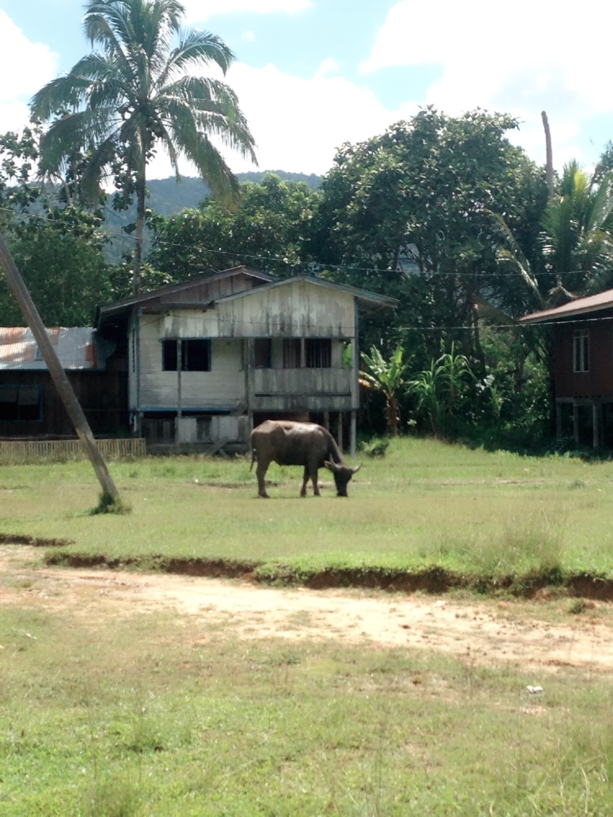 Dokumentasi Kunjungan Lapangan Kegiatan Kampung Sejahtera Long Kerbau Hewan Ternak