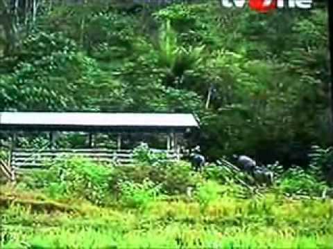 Ujung Negeri Long Midang Krayan Kaltim Youtube Bawan Kab Nunukan