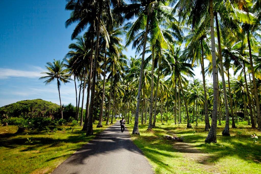 Objek Wisata Pantai Srau Pacitan Jatim Gambar Kebun Kelapa Kab