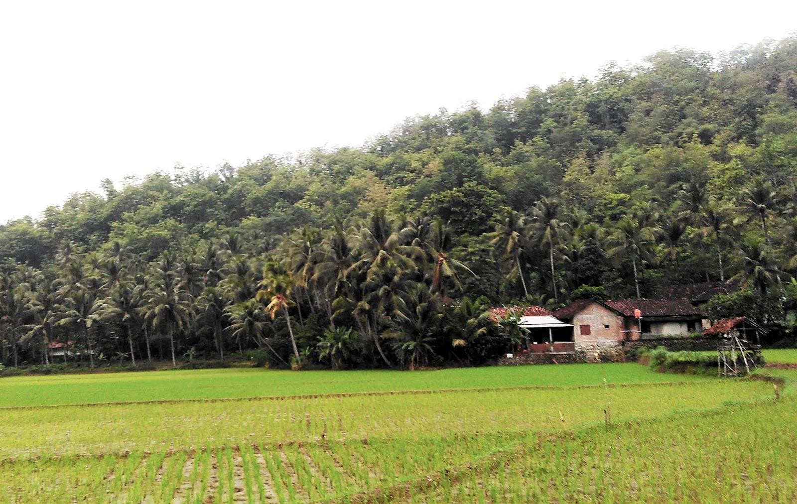 Pemandian Banyu Anget Tirto Husudo Pacitan Ombonejagad Pemandangan Sekitar Lokasi
