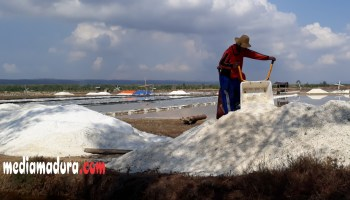Tolak Impor Garam Petani Pamekasan Bagikan Gratis Media Pengamat Lokal