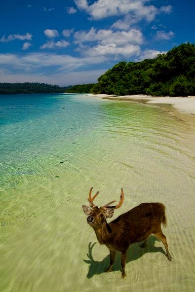 3 Jpg Hutan Pulau Peucang Salah Satu Ekosistem Hujan Tropis