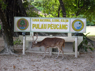 Pulau Peucang Tourbackpack Terdapat Selat Panaitan Kabupaten Pandeglang Banten Sebelah