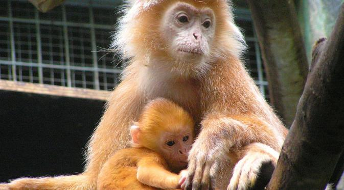 4 Hewan Endemik Taman Ujung Kulon Viral Bintang Nasional Foto
