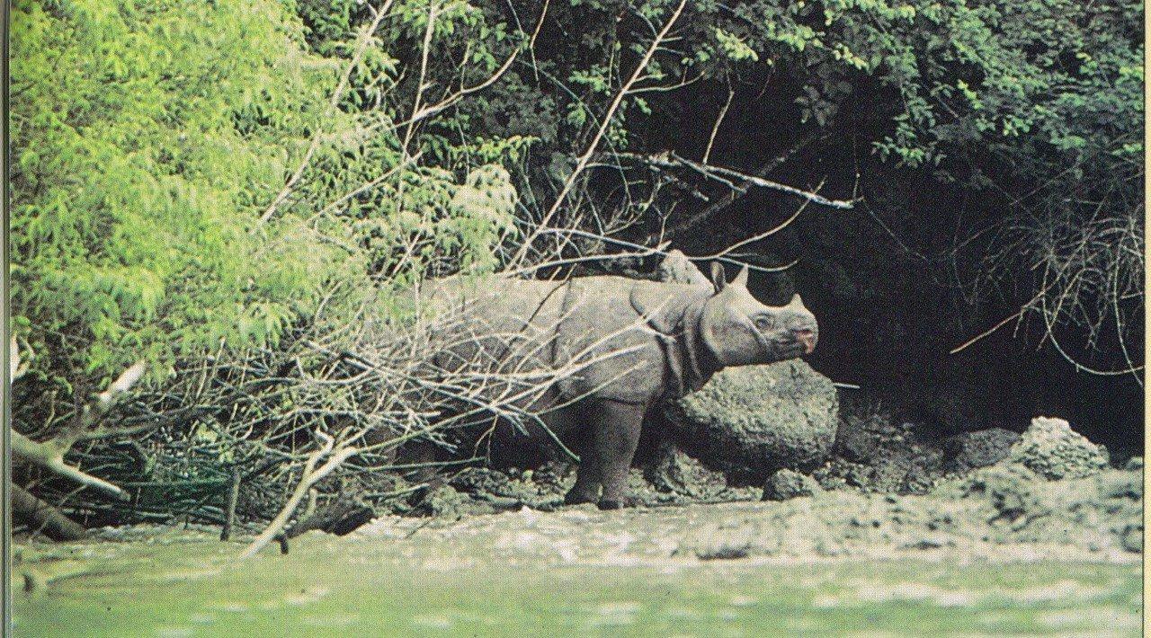 Aja Bisa Lo Dapet Taman Nasional Ujung Kulon Seru Gan