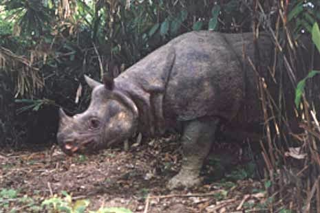 Blog Zea Khalik Pesona Kabupaten Pandeglang Taman Nasional Ujung Kulon