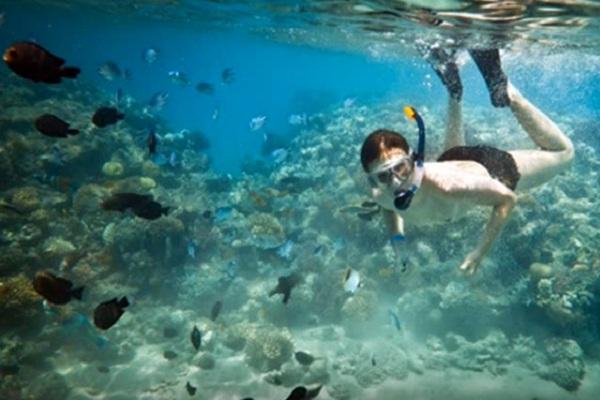 Cihandarusa Taman Snorkeling Diving Ujung Kulon Merahputih Nasional Kab Pandeglang