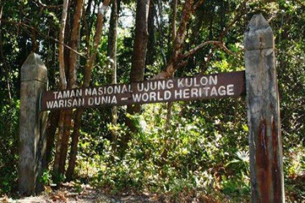 Jawa Terlihat Taman Nasional Ujung Kulon Harimau Kab Pandeglang