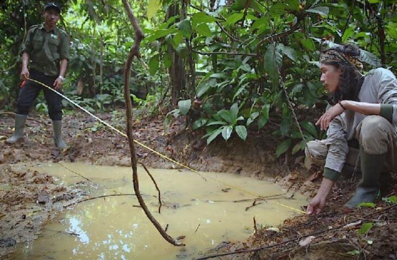 Melacak Robot Rawing Ujung Kulon Ditjen Konservasi Sumber Badak Jawa