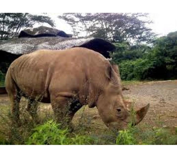 Nasional Ujung Kulon Tempat Populasi Badak Jawa Terakhir Taman Kab