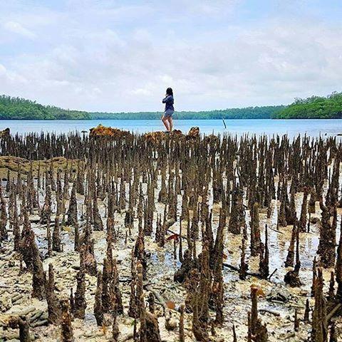Pandeglang Banten Visitpandeglang Instagram Photos Videos Loc Pulau Handeulem Taman