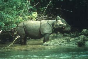 Taman Nasional Ujung Kulon Jakarta Utiket Kab Pandeglang