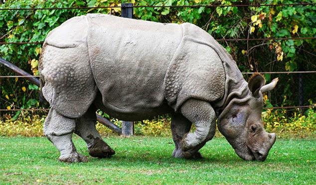 Taman Nasional Ujung Kulon Menyimpan Keragaman Flora Fauna Kab Pandeglang