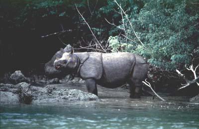 Taman Nasional Ujung Kulon Objek Wisata Banten Blog Pariwisata Berada