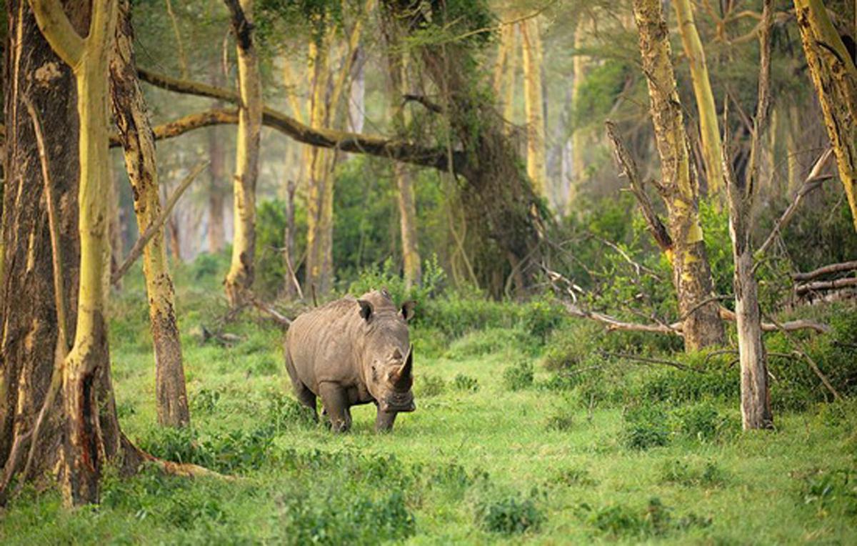 Taman Nasional Ujung Kulon Situs Warisan Alam Dunia Wacana Kab
