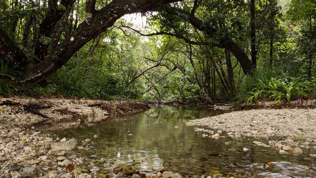 Ujung Kulon National Park Wikipedia Taman Nasional Kab Pandeglang