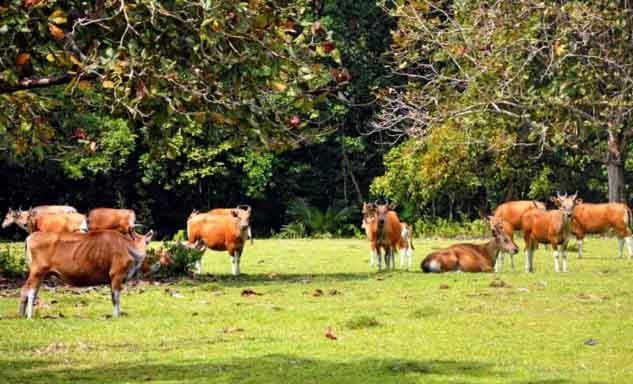 Wisata Ujung Kulon Taman Nasional Banten Kab Pandeglang