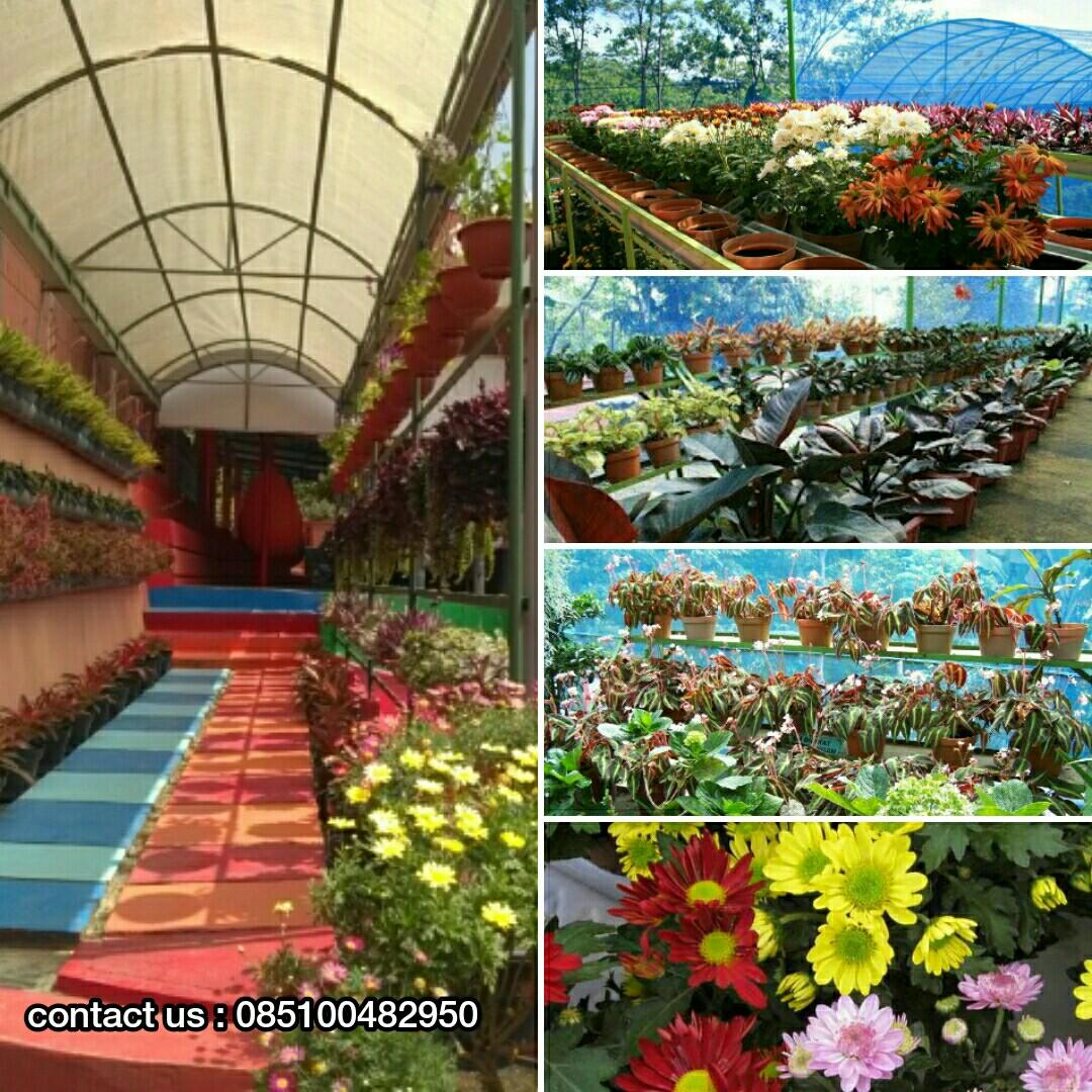 085100482950 Wisata Bukit Flora Pasuruan Lokasi Pengunjung Bisa Membeli Bunga