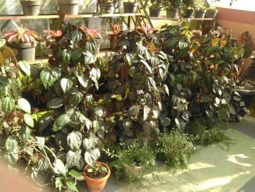 Agrowisata Jawa Timur 085100482950 Wisata Bukit Flora Pasuruan Pengunjung Sepuasnya