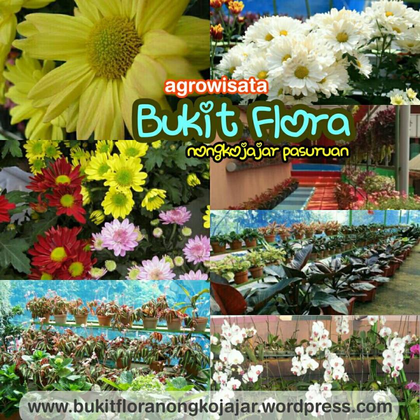 Bukit Flora Laman 2 085100482950 Wisata Outbound Pasuruan Informasi Lengkap