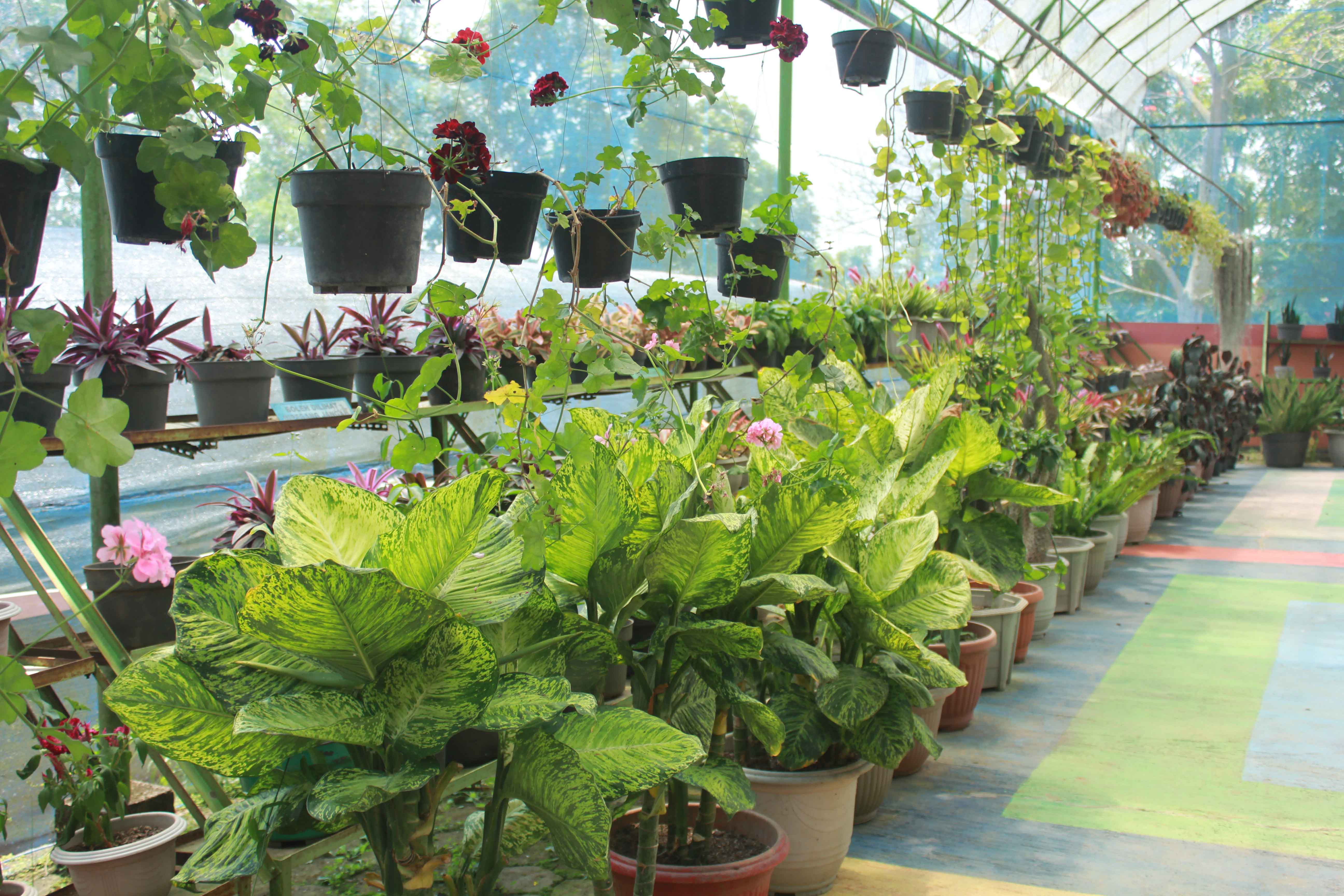 Wisata Bukit Flora Blog Museum Online Kabupaten Pasuruan Img 1786