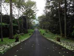 Bersantai Kebun Raya Purwodadi Pasuruan Wisesatravel Suasana Kab