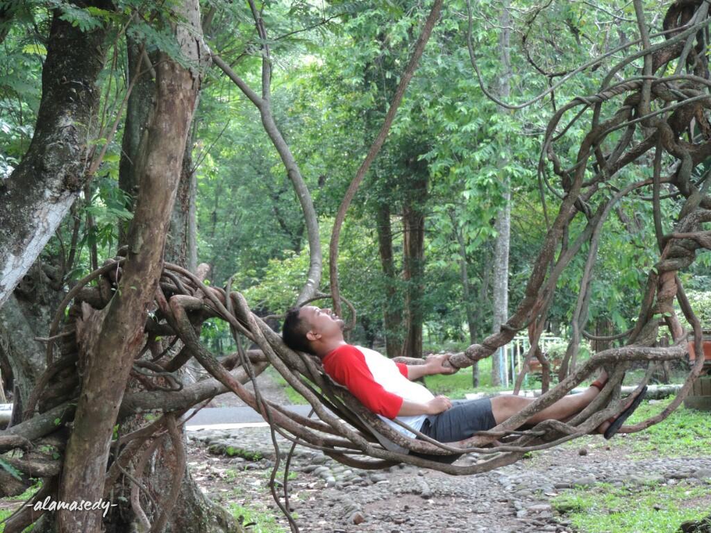 Bertemu Pohon Unik Kebun Raya Purwodadi Alamasedy Deru Bising Kendaraan