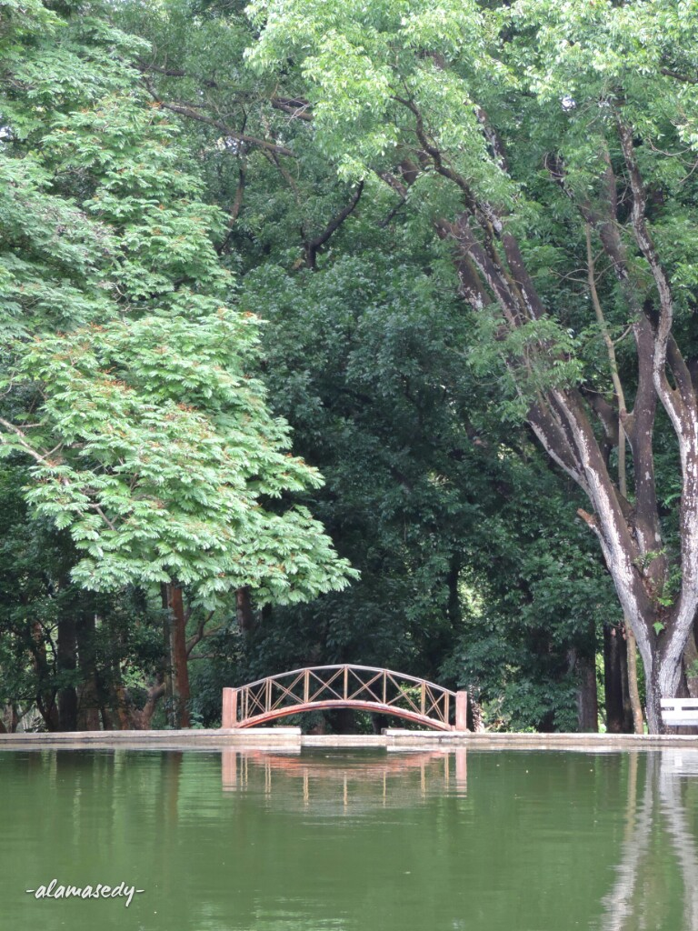 Bertemu Pohon Unik Kebun Raya Purwodadi Alamasedy Kolam Tengah Kab