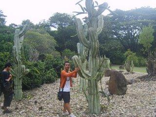 Kebun Raya Indonesia Alamendah Blog Kaktus Purwodadi Kab Pasuruan