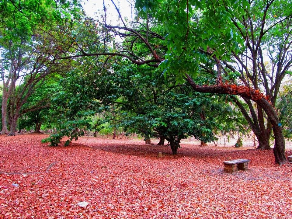 Kebun Raya Purwodadi Kab Pasuruan
