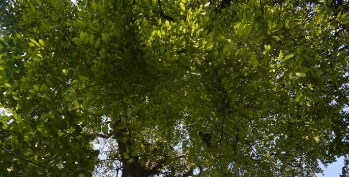 Kebun Raya Purwodadi Kawasan Konservasi Berkonsep Wisata Alam Kekinian Kab