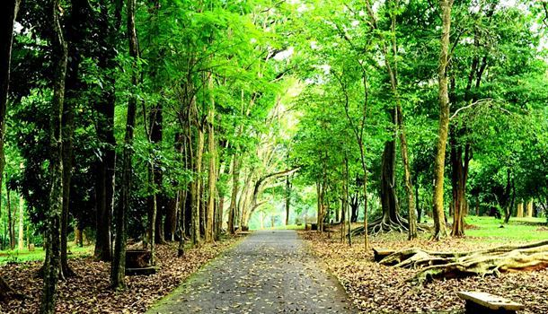 Kebun Raya Purwodadi Lokasi Rute Harga Tiket Masuknya Image Priceindo