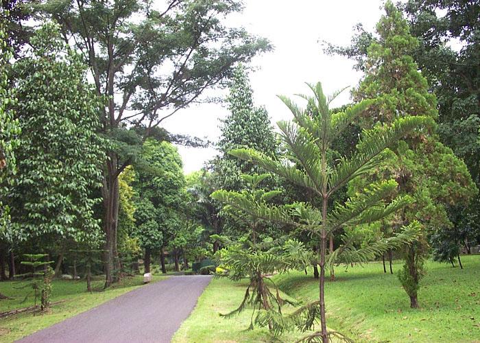 Purwodadi Botanic Garden Short History Park Luas Kebun Raya Sakitar