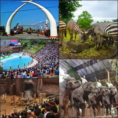 Dpm Ptsp Provinsi Jatim Taman Safari Indonesia 2 Tsi Air