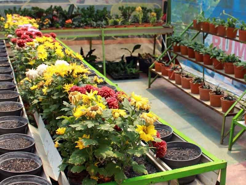 5 Tempat Wisata Keluarga Pasuruan Traveling Yuk Bukit Flora Taman
