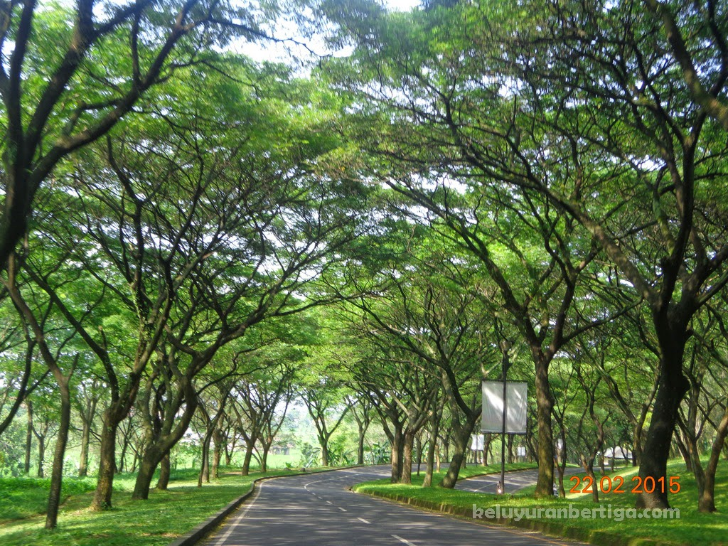 Exploring Beauty Nusantara 15 Tempat Wisata Kab Pasuruan Jalanan Asri