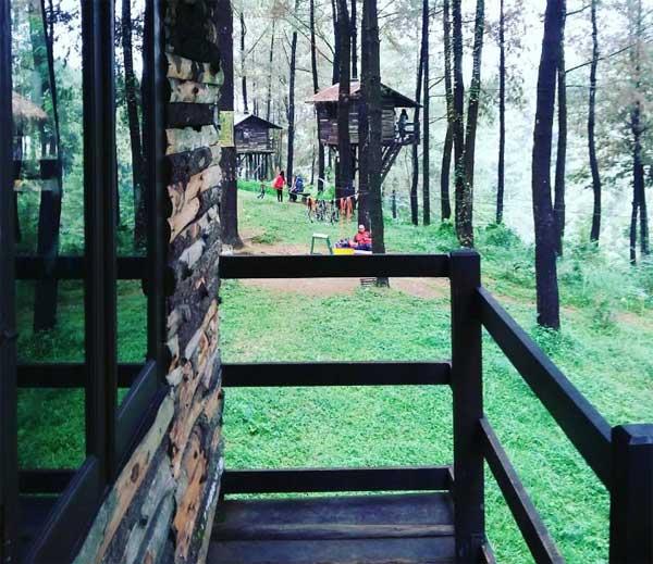 Nih 10 Tempat Wisata Pasuruan Bikin Traveler Betah Pines Taman