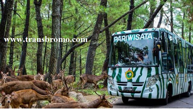 Wisata Pasuruan Jawa Timur Kecamatan Prigen Taman Safari 2 Air