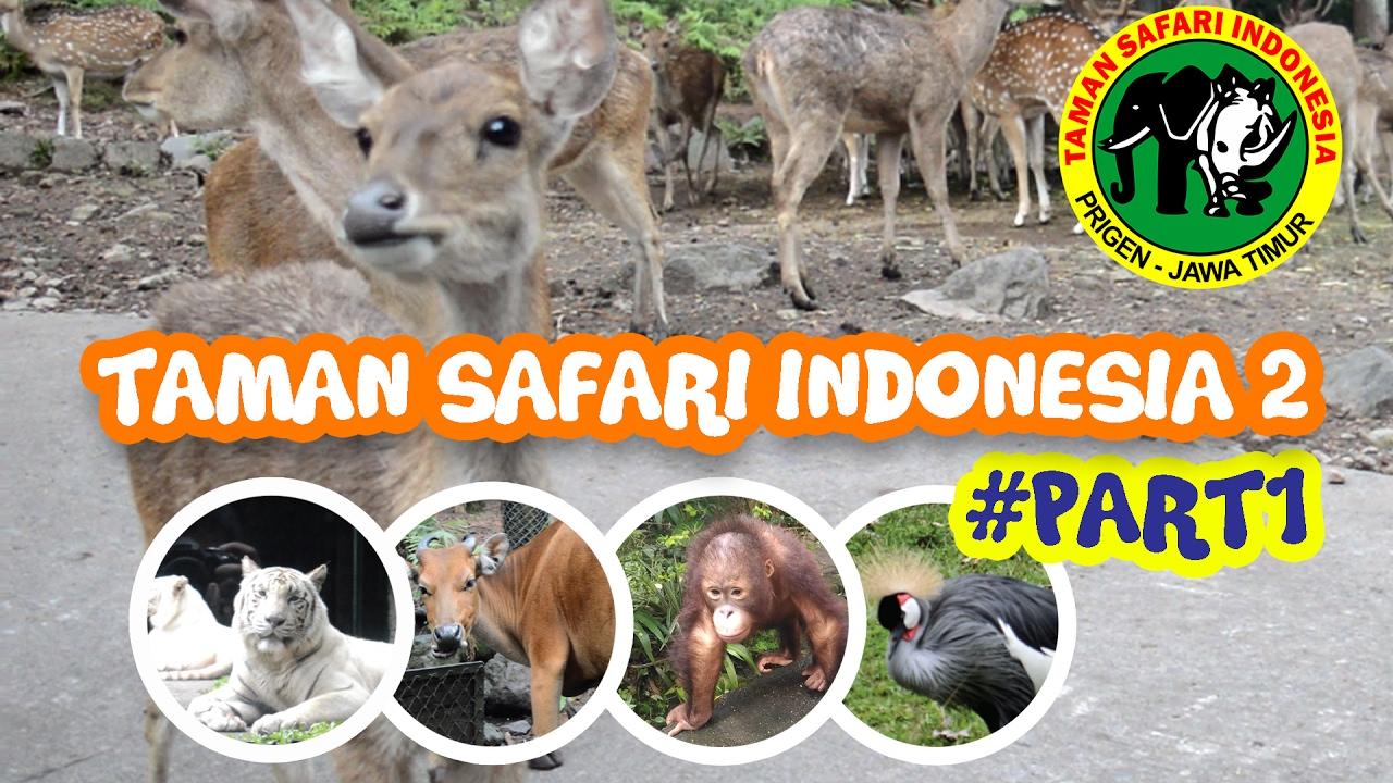 6 Wisata Alam Pasuruan Bikin Betah Pengunjung 2 Taman Safari