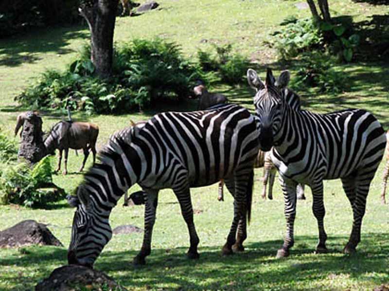 8 Obyek Wisata Pasuruan Patut Dikunjungi Taman Safari Indonesia Ii