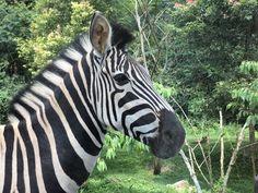 Gading Resto Taman Safari Indonesia 2 Kab Pasuruan
