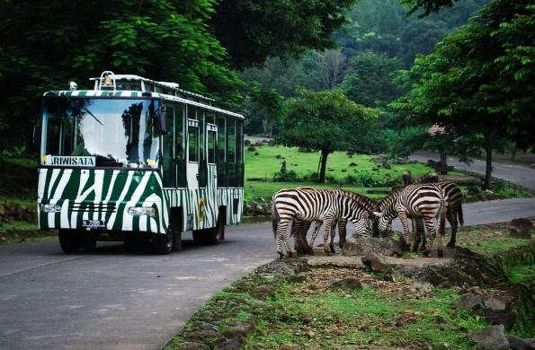 Harga Tiket Masuk Taman Safari Prigen Mei 2018 Daftar Indonesia