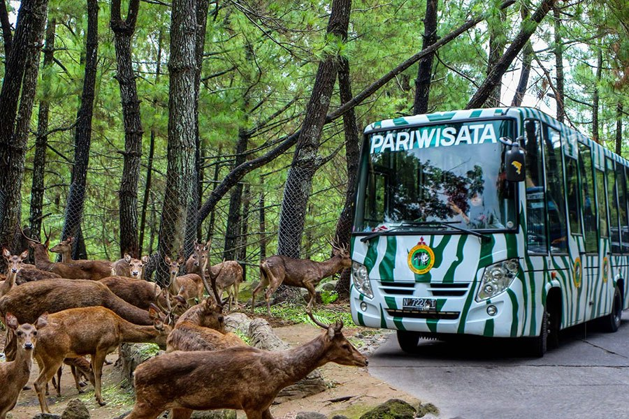 Harga Tiket Masuk Taman Safari Prigen Terbaru Mei 2018 Sekilas