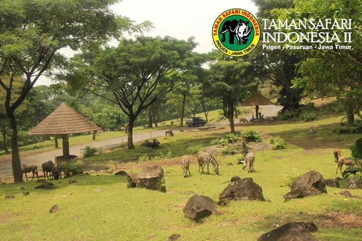 Indonesia Vacation Pasuruan Taman Safari Ii Nicknames Actual Prigen Park