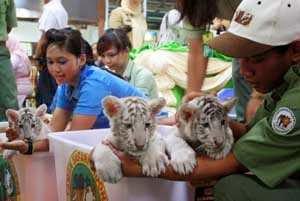 List Wisata Daerah Pasuruan Taman Safari Prigen Pula Sejumlah Pertunjukan