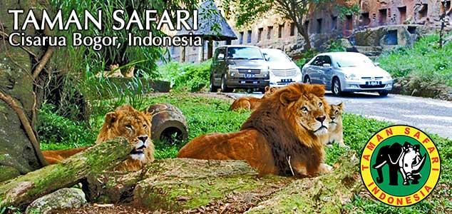 Taman Safari Bogor Memiliki Koleksi Sekitar 2500 Jenis Satwa Berwisata