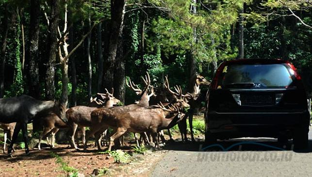Taman Safari Indonesia 2 Prigen Bromotour Id Kab Pasuruan
