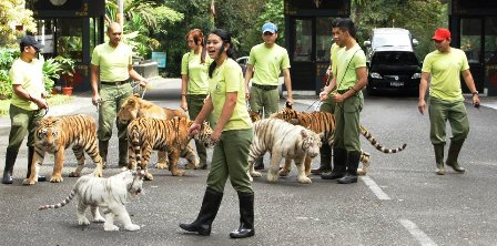 Taman Safari Indonesia 2 Prigen Inspiring Outbound Kab Pasuruan